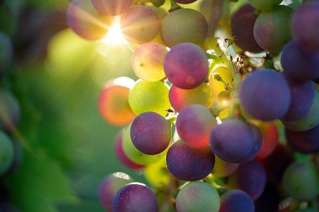 L'azienda vinicola Pratum Coller